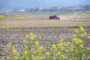 農業の写真素材 [FYI00038089]