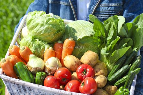野菜の写真素材 [FYI00038095]