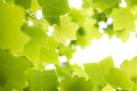 新緑の素材 [FYI00038098]