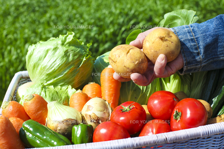 収穫の写真素材 [FYI00038107]