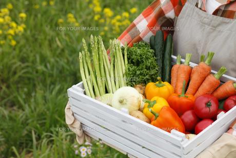 収穫の素材 [FYI00038115]