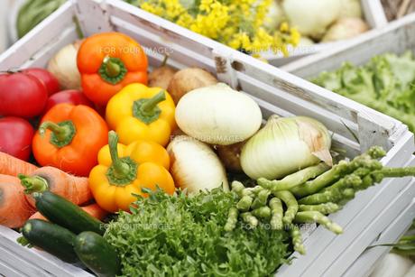 野菜の素材 [FYI00038118]