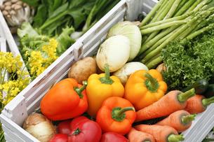 野菜の写真素材 [FYI00038120]