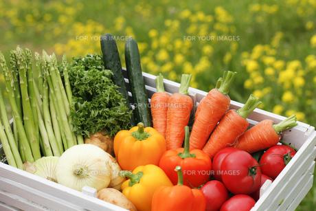 野菜の写真素材 [FYI00038122]