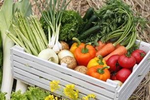 野菜の素材 [FYI00038132]