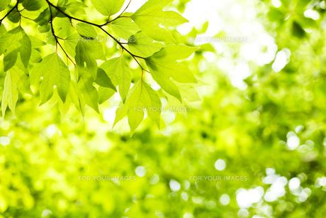 新緑の素材 [FYI00038175]