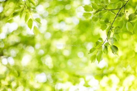 新緑の素材 [FYI00038182]