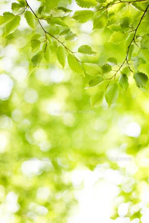 新緑の写真素材 [FYI00038183]
