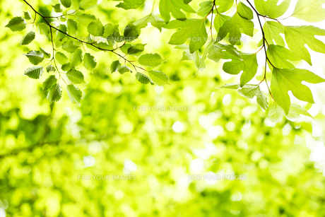 新緑の素材 [FYI00038186]