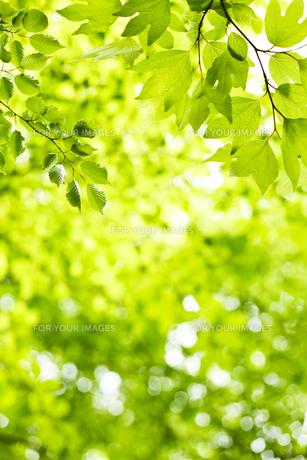 新緑の素材 [FYI00038189]