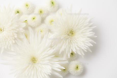 仏花の写真素材 [FYI00038226]