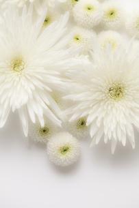 仏花の写真素材 [FYI00038234]