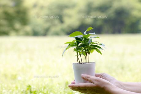 エコロジーの写真素材 [FYI00038266]