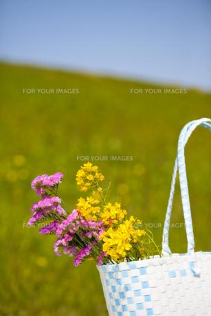 春の写真素材 [FYI00038285]