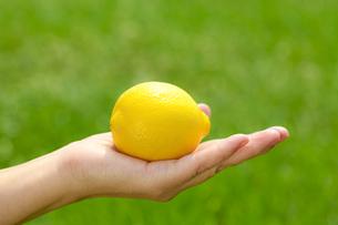 レモンの素材 [FYI00038292]