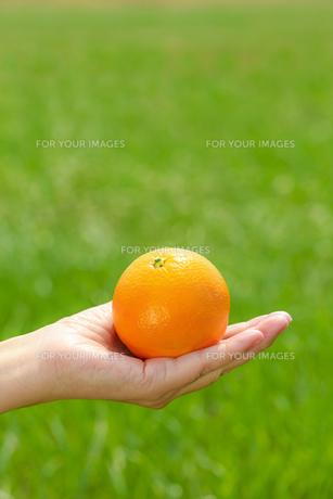 オレンジの写真素材 [FYI00038293]