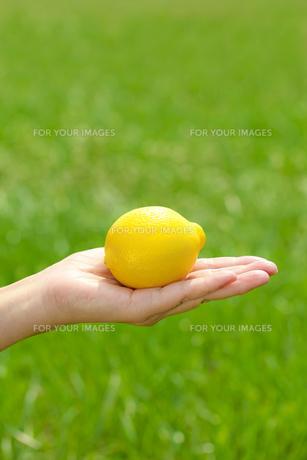 レモンの素材 [FYI00038294]