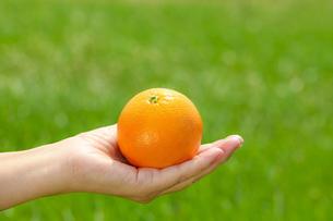 オレンジの写真素材 [FYI00038298]