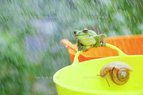 雨とガエルとカタツムリの写真素材 [FYI00038542]