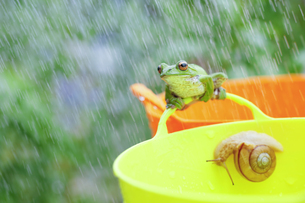 雨とガエルとカタツムリの素材 [FYI00038542]