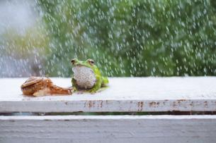 カエルとカタツムリの写真素材 [FYI00038546]