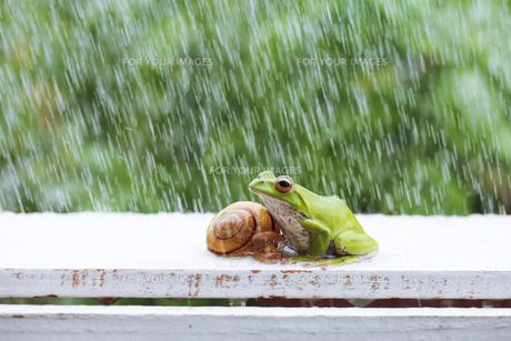 カエルとカタツムリの写真素材 [FYI00038552]