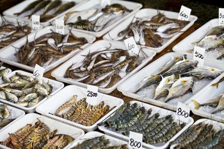 魚市場の写真素材 [FYI00038566]