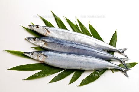 秋刀魚の写真素材 [FYI00038805]