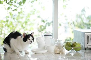 猫の素材 [FYI00038834]