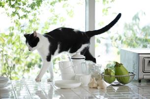 猫の素材 [FYI00038870]