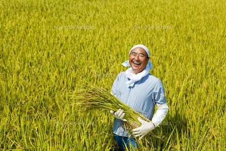 農業の素材 [FYI00038949]
