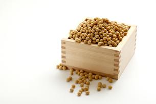 大豆の写真素材 [FYI00039205]