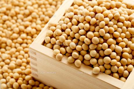 大豆の写真素材 [FYI00039207]
