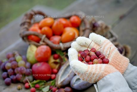 秋の味覚の写真素材 [FYI00039208]