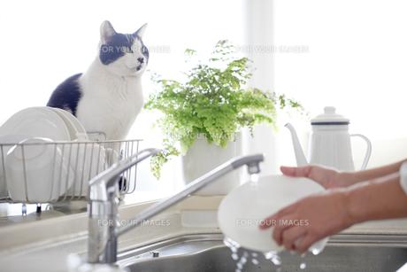 猫の写真素材 [FYI00039359]