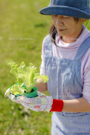 家庭菜園の写真素材 [FYI00039492]