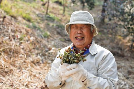 山菜採取の素材 [FYI00039498]