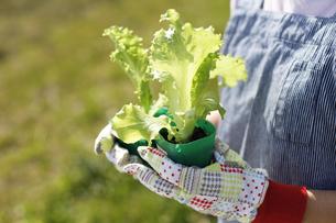 家庭菜園の写真素材 [FYI00039500]