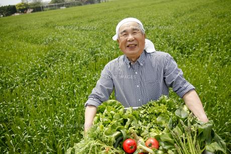 収穫の写真素材 [FYI00039633]