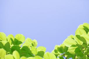 新緑の素材 [FYI00039634]