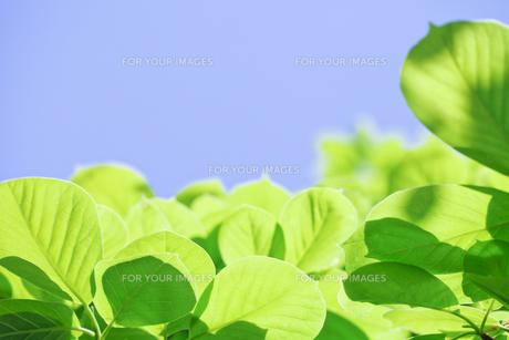 新緑の素材 [FYI00039637]