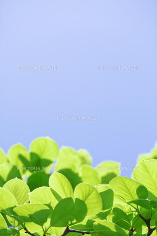 新緑の素材 [FYI00039643]