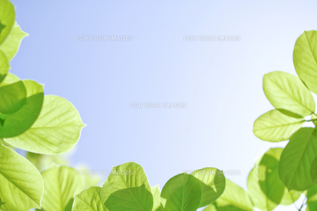 新緑の素材 [FYI00039663]