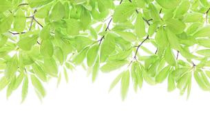 新緑の素材 [FYI00039675]