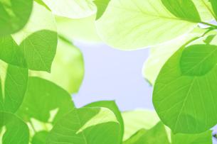 新緑の素材 [FYI00039677]