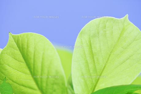 新緑の素材 [FYI00039678]