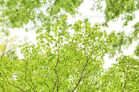 新緑の素材 [FYI00039708]