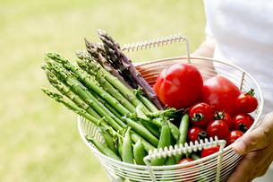 野菜収穫の素材 [FYI00039818]