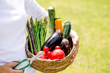 野菜の収穫の写真素材 [FYI00039829]