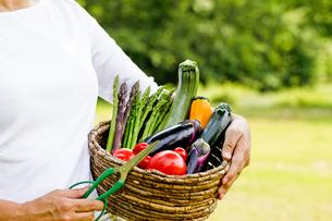 野菜収穫の素材 [FYI00039830]